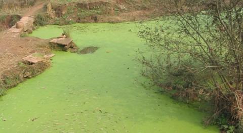 ¿Cómo eliminar mal sabor agua algas oxidación avanzada?