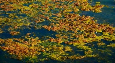 Hipo Clean II:degradación materia orgánica y degradación eficiente fango