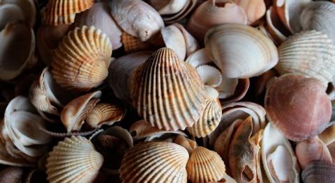 almeja fina revela alta contaminación varias lagunas costeras Túnez