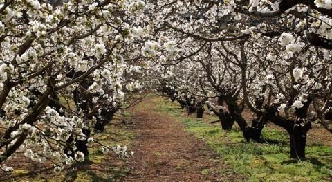 Junta Extremadura impulsa riego eficiente más 6.000 hectáreas