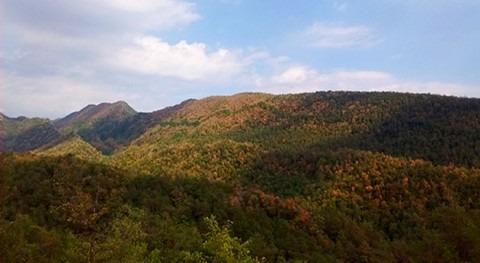 sequía estival 2016 afecta 2,2% bosques catalanes