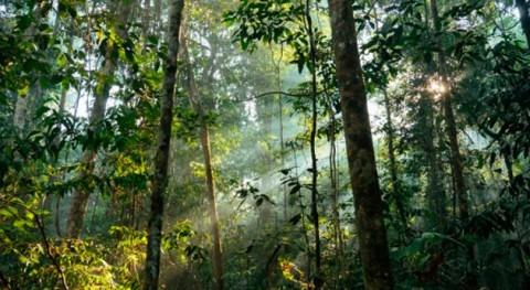 barrera ríos influyó, pero no llega explicar alta biodiversidad vegetal amazónica