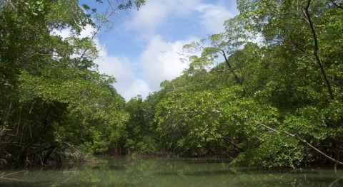 Niño lleva al extremo sequía bosques amazónicos