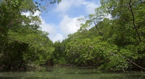 bosques inundados Amazonas emiten tanto metano como océanos