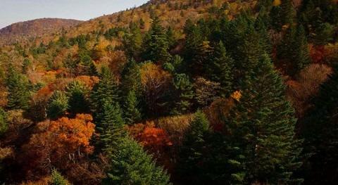 Rusia protege bosques cuenca río Bikin, particular Amazonas