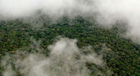 Amazonia, capaz producir propia estación lluviosa