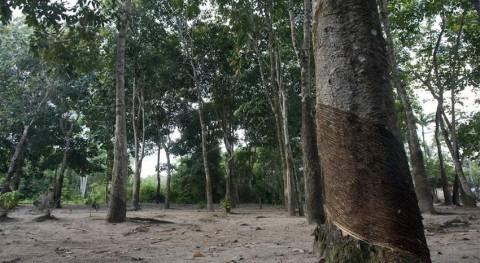 Amazonía (Autor: ONU/Eskinder Debebe)