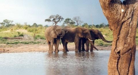 Zimbabue, devastadora sequía obliga poner venta animales salvajes