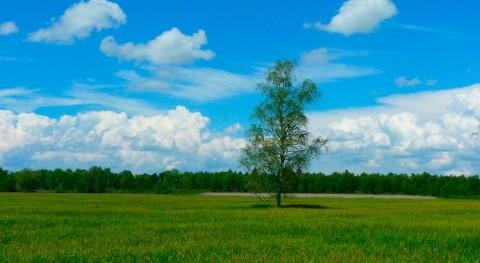 Fundación Aquae recibe sello compensación huella carbono MAPAMA