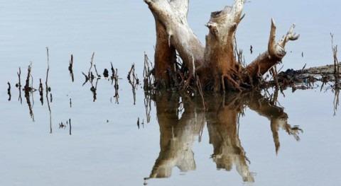 ¿Puede ayudarnos naturaleza mejorar gestión agua?