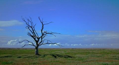 """planeta podría alcanzar """"punto no retorno"""" 2035 si no se frena cambio climático"""