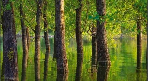Medio ambiente Europa: urge cambio rumbo afrontar desafíos cambio climático