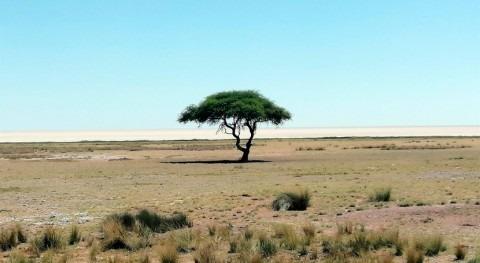 Descubren mecanismo que interrumpe crecimiento plantas falta agua