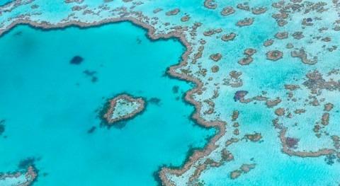 ¿Cómo afecta cambio climático arrecifes coral?