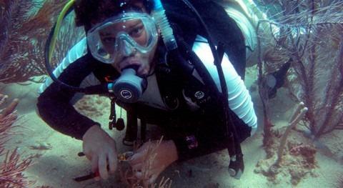 ¿Cómo sobrevivieron corales Caribe al cambio climático?