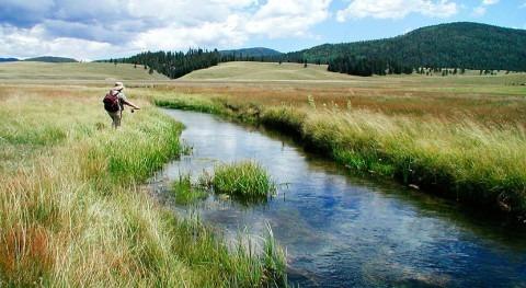 estudio detecta acumulación antidepresivos y antibióticos peces aguas superficiales