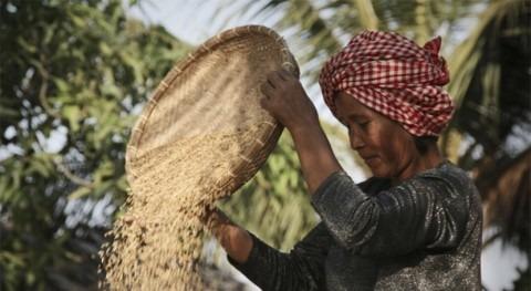 industria arroz, golpeada COVID-19 y cambio climático