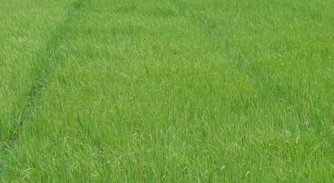 agricultores apoyarán dragado Guadalquivir si se moderniza regadío arroz