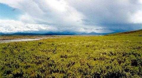 vegetación tundra aumenta cambio climático