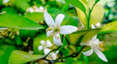 ¿Cómo afectan cambios presión Atlántico al comportamiento flora Península?