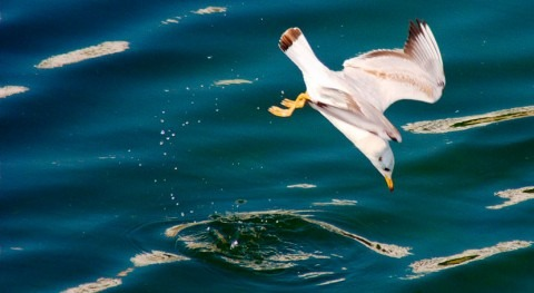 Gobierno andaluz censa 2.884 aves acuáticas 32 zonas húmedas Granada