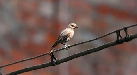 ¿Cuál es papel aves como indicadoras cambio climático?