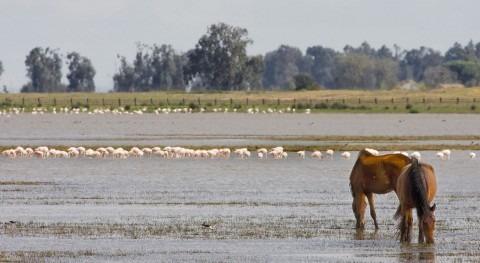Pedimos Junta que tome medidas declive aves acuáticas amenazadas Doñana