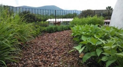 Implementación azotea verde producción hortalizas y plantas medicinales