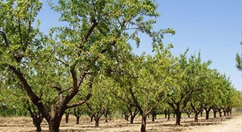 uso agrícola agua residual tratada: realidad creciente