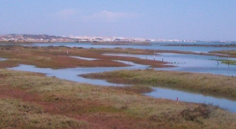 salinas Bahía: apuesta creación empleo y explotación recursos