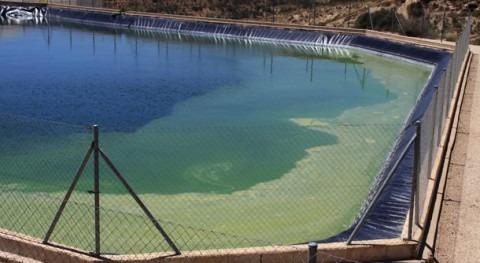 ¿ qué aparecen algas mi balsa durante meses verano?