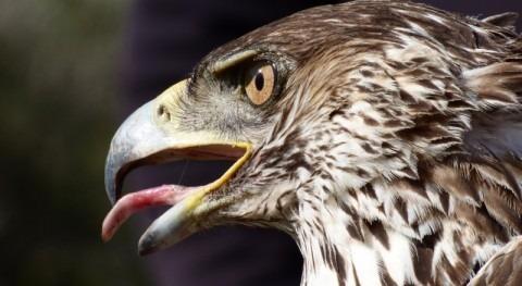 Licitado proyecto adecuación líneas alta tensión protección avifauna