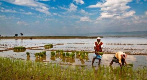 nuevo estudio, aguas Bangladés están plagadas drogas y productos químicos