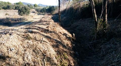 Retirada vegetación invasora tramo barranco Fuente, afluente Maspujols