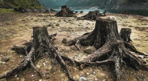 consecuencias crisis biodiversidad ecosistemas y humanos