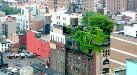 Ciudades biofílicas como respuesta al cambio climático