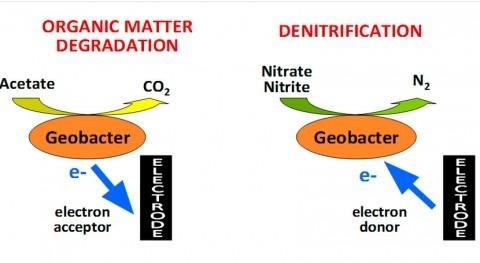 Agua y calambres II: ¿Bioelectro… qué? ¡Bioelectrogénesis!