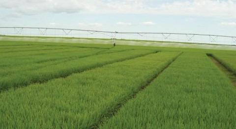 Agricultores Región Valparaíso recibieron más 2,3 millones dólares bonos riego durante 2013