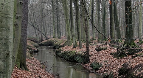bosques frenan, momento, cambio climático y aumento CO2