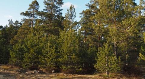 clima pasado ayuda explicar almacenaje carbono actualidad