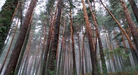 Aumentar diversidad bosques resulta insuficiente eventos extremos sequía