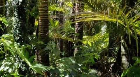 estudio NASA indica que actividad humana está secando Amazonas