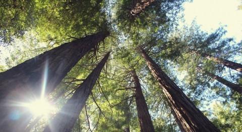 ¿Cómo se adaptan árboles al cambio climático?
