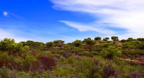 silvicultura base ecohidrológica es más adecuada gestionar bosques mediterráneos