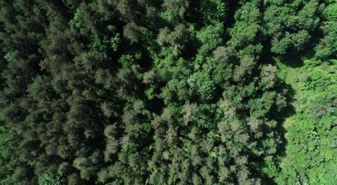 Aumentar biodiversidad bosques hará que resistan al cambio climático