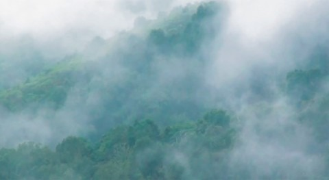 bosques, esponjas repletas agua