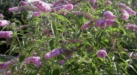 URA planta 19.000 plantas y erradica especies invasoras 51.000 m² márgenes ríos 2017