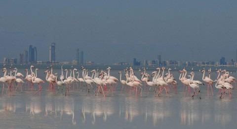 Emiratos Árabes Unidos designa humedal Bul Syayeef como sitio Ramsar
