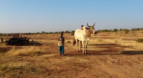 ¿Cómo hacen frente al cambio climático agricultores Burkina Faso?