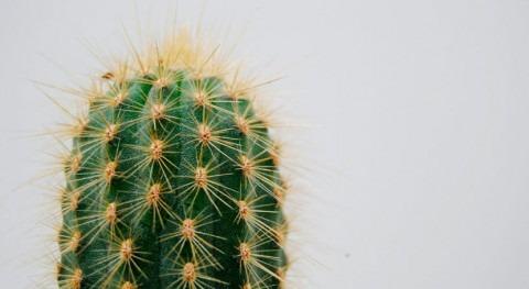 Cactus y escarabajos sirven inspiración recolectar agua desierto